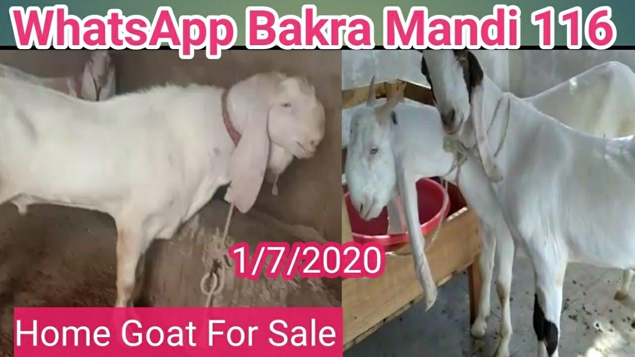 How To Buy And Sale Your Goat Through Whatsapp Bakra Mandi No 116 Livestock Market Karachi