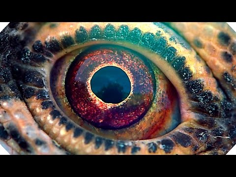Trailer do filme Voyage of Time