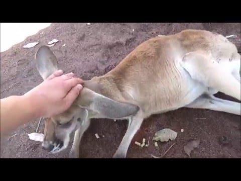 Caversham Wildlife Park - Western Australia