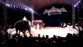 Шоу слонов в Каменске-Уральском !?!?!?!?!?!?!?!