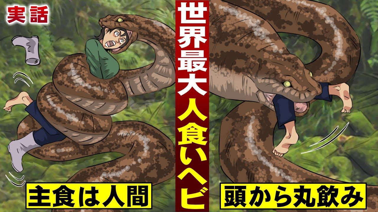 【実話】主食は人間…世界最悪の人食いヘビ。見つけたら…頭から一気に飲む。