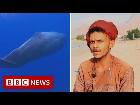 Fishermen Haul In $1.5 Million Chunk Of Whale Vomit