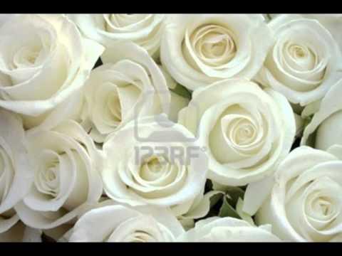 Шатунов белые розы караоке