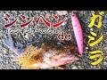 シンペン(シンキングペンシル)でガシラを釣る動画。無理やり?!いやいや、場合によってはハマる時がある!・・・かも?!