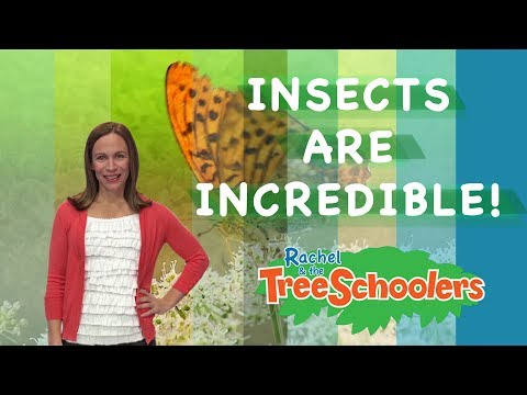 Insects Are Incredible   Rachel and the Treeschoolers   Two Little Hands TV