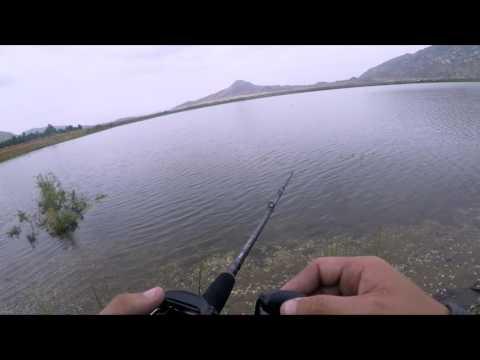 My First Huddleston Fish | Lake Perris