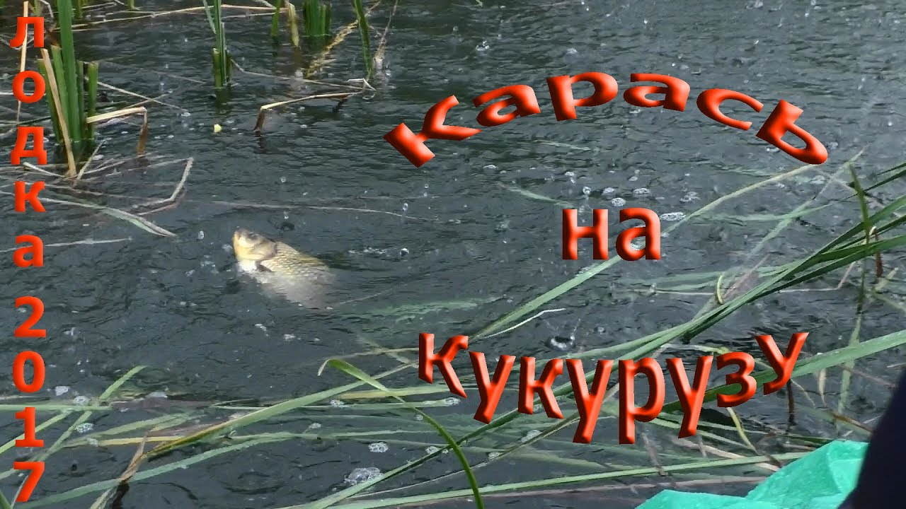 рыбалка на карася весной на поплавочную удочку на кукурузу