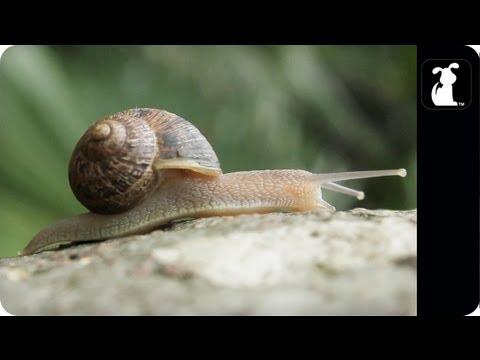 AWOLNATION - Sail Parody - ASHELLNATION - Snail Petody