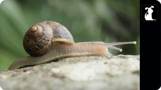No snails were harmed in the making of this video. Blame it on my m...