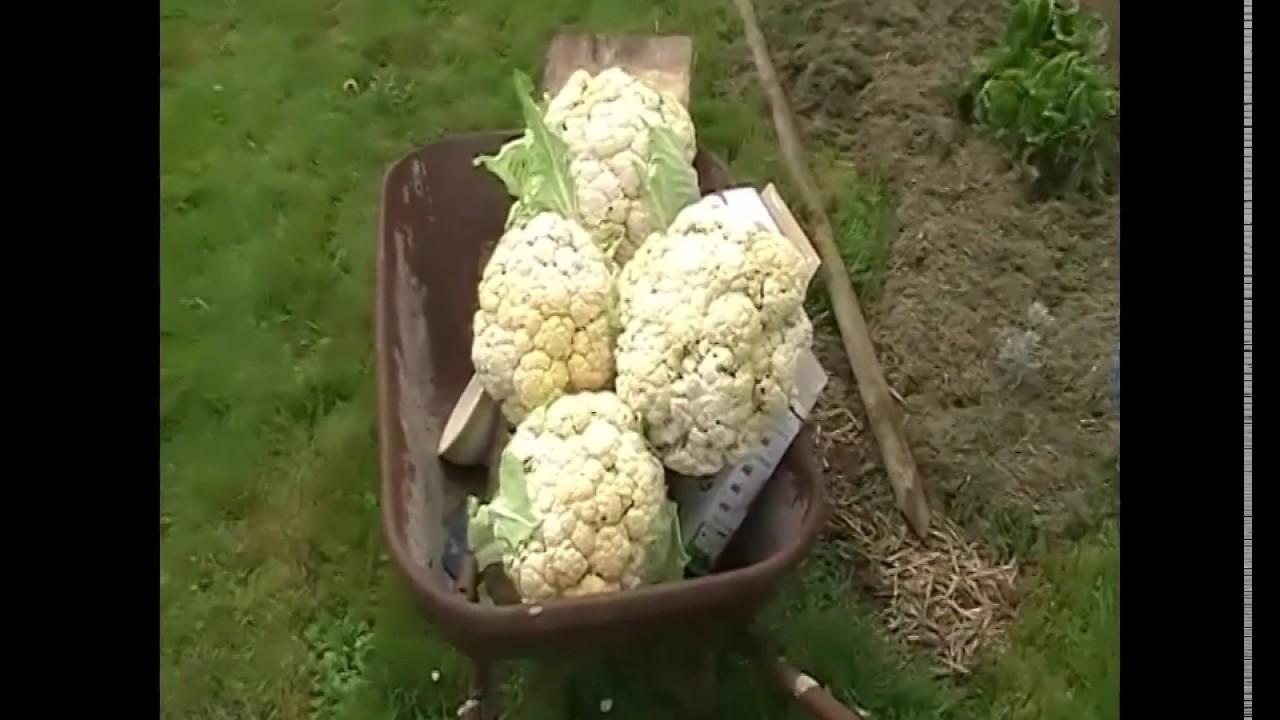 jardin bio facile se d barrasser naturellement des limaces et escargots permaculture youtube. Black Bedroom Furniture Sets. Home Design Ideas