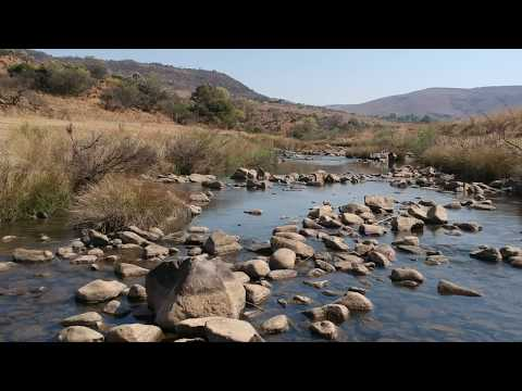 The upper Komati River with Largescale and Smallscale Yellowfish (Labeobarbus species)