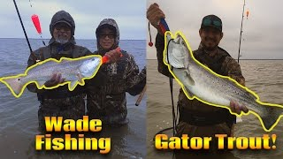 Wade Fishing Corpus Christi, TX | GATOR Speckled Trout!