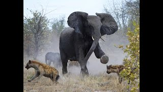 7 trận chiến trong thế giới động vật