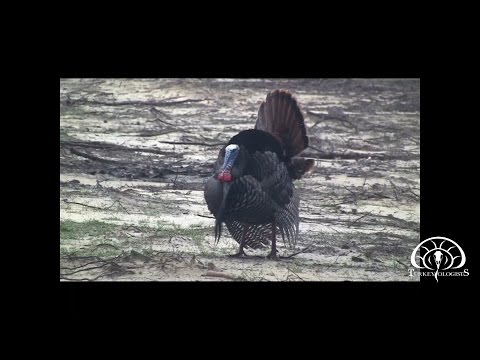 The Turkeyologists TV Episode 13