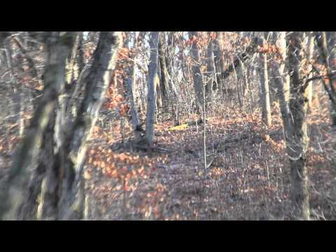 Iowa Trophy Hunts - Missouri Big Buck