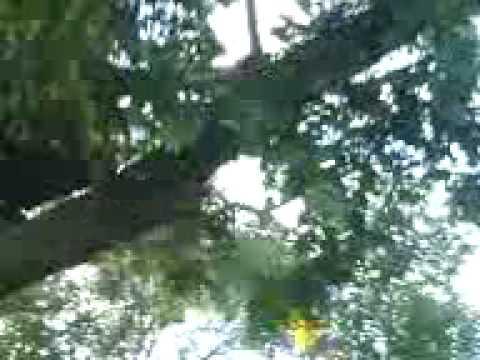 Martin und Erwin auf einem Baum.3GP
