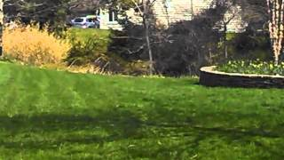 What Step Lawn Care Program