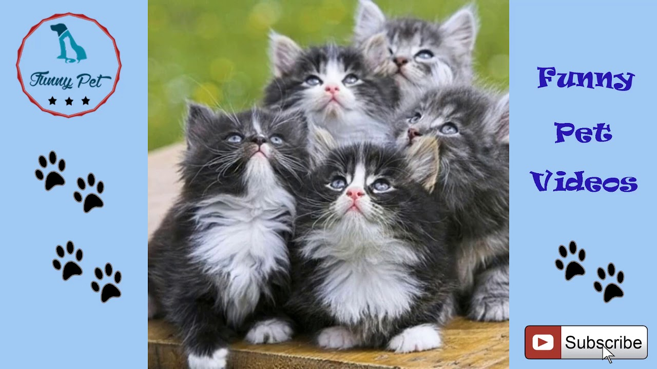 Funny Cat Videos For Kids Funny Cat Videos For Kids To Watch