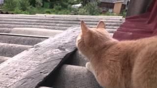 Что происходит когда кошка видит птицу