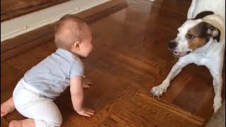 Dog Love 🔴 Cute and Funny  Dog And Babies  Videos Compilation