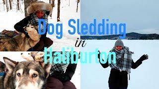 Dog Sledding in Haliburton with Winterdance - Travel with Arianne - Travel Canada episode #17