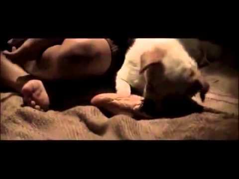 Video cảm động khiến bạn phải khóc và suy nghĩ