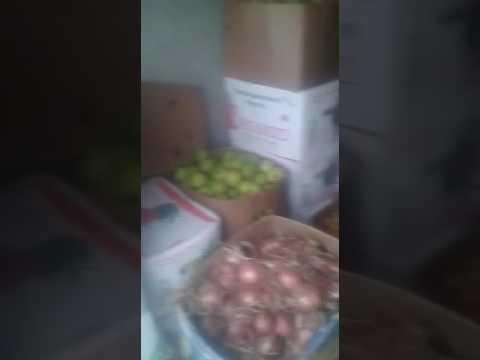 Yeni suraxanida meyve terevez yem tukani