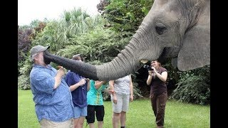 CUte Elephant  - Funny Elephants Trolling Human Compilation
