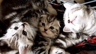cute cat moments  the kitten is sleeping awkward but so sweet