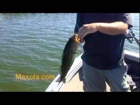 New Fishing Lure Revealed First Time Ever From Maxota Lures And Baits