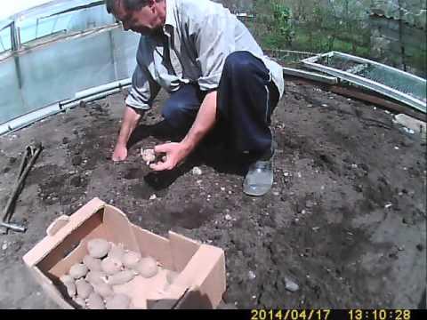 видео: посадка картофеля  - самый легкий способ