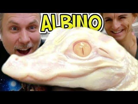I GOT AN ALBINO ALLIGATOR!!!   BRIAN BARCZYK
