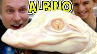 I GOT AN ALBINO ALLIGATOR!!! | BRIAN BARCZYK