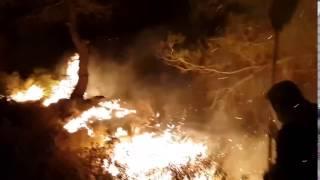الحرائق تطال الضفة الغربية ورام الله تمد العون لتل أبيب