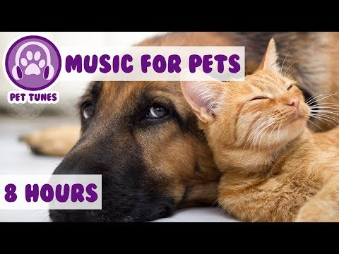 8 HOURS OF PET MUSIC! Relaxing Music to Soothe and Comfort Pets and Help Calm and Reduce Anxiety! 🐹