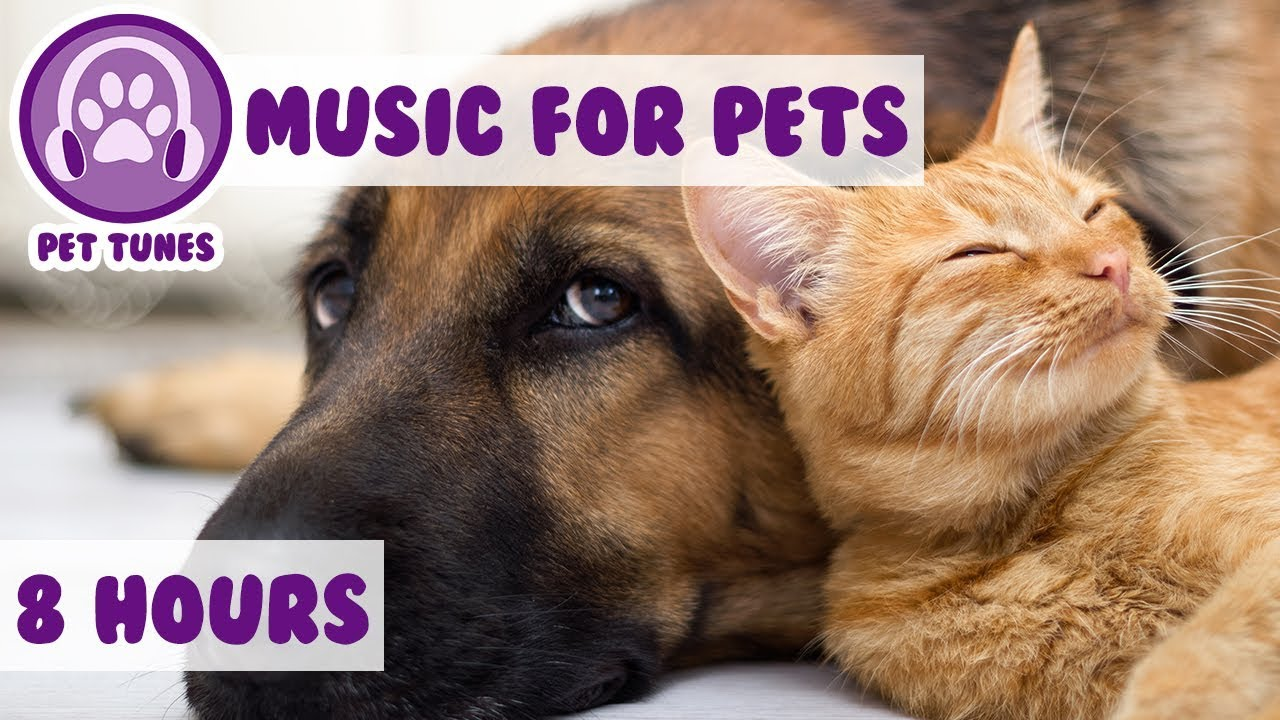8 HOURS OF PET MUSIC! Relaxing Music to Soothe and Comfort Pets and Help Calm and Reduce Anxiety! ??