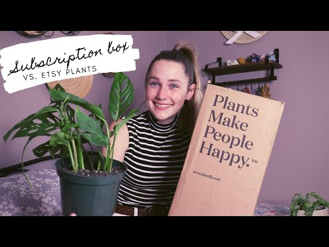 House Plant Subscription Boxes Vs. Etsy Plants