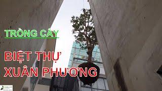✅VƯỜN-Thi công Trồng cây Mít,cây Bưởi sân vườn Biệt thự Xuân Phương/Thi công sân vườn/TungLam Garden