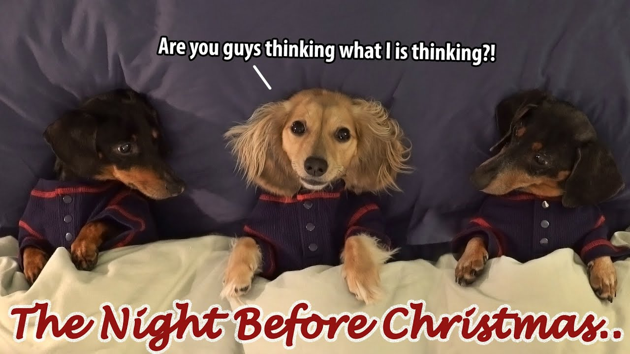 Download Ep#7: Dachshund Mischief on the Night Before Christmas