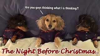 Ep#7: Dachshund Mischief on the Night Before Christmas