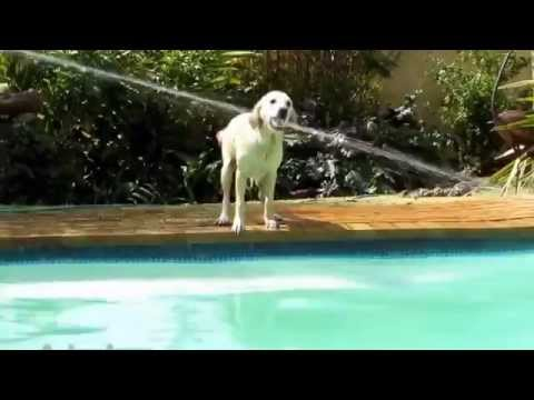 Funny Dogs Swimming in Pool Compilation 2016