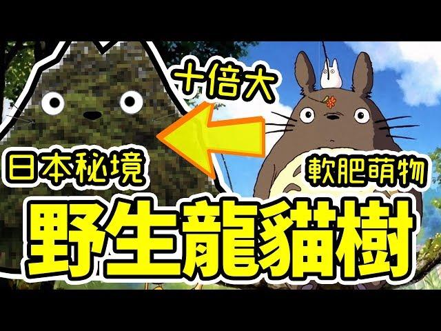日本袐境!比龍貓大十倍的龍貓樹!|好倫|B級旅行推廣協會
