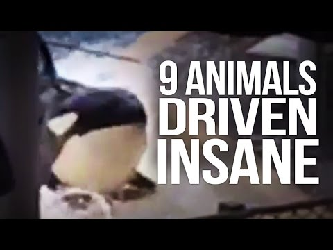 9 Animals Driven Insane