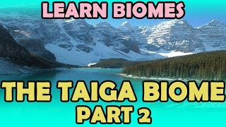 The Taiga Biome - Part 2