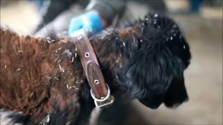 Зоозащита-НН спасла собак из «концлагеря» в Нижнем Новгороде