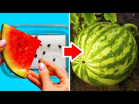 35-fresh-food-life-hacks-to-boost-your-day