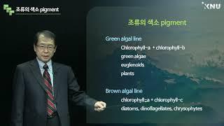 담수생태학 (38) 식물플랑크톤 2부. 식물플랑크톤 색…
