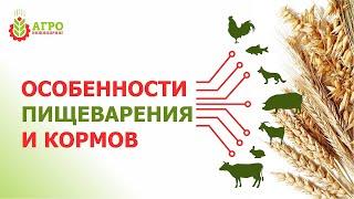 """Как """"работают"""" пищеварительные системы у животных, птицы и рыбы."""