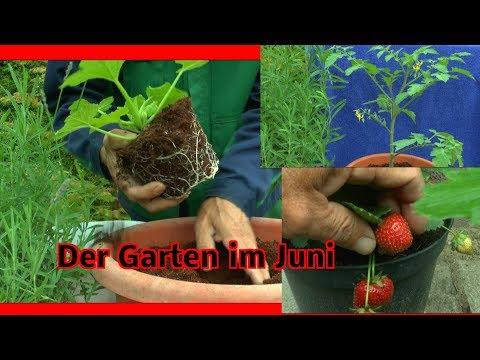 Garten Inspirationen im Juni Gurken Tomaten und mehr beobachten und machen mit Pflanzen