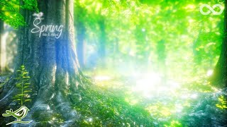 Spring • Beautiful Relaxing Music with a Flute, Cello, Guitar & Piano